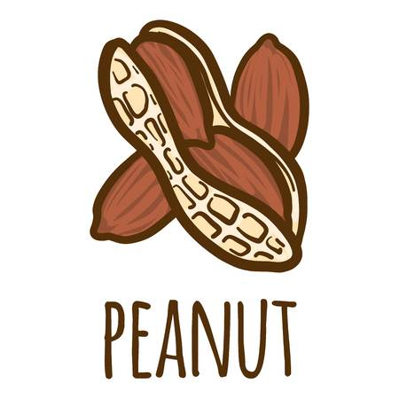 Peanut icon. Hand drawn illustration of peanut vector icon for web design