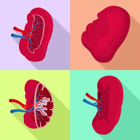 Spleen icons set. Flat set of spleen vector icons for web design Stockfoto - 125312616