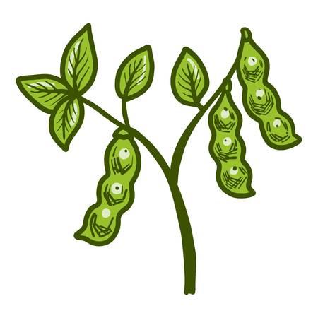 Big soybean plant icon. Hand drawn illustration of big soybean plant vector icon for web design
