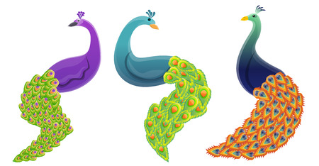 Peacock icons set. Cartoon set of peacock vector icons for web design