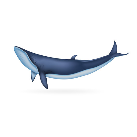 Whale icon. Realistic illustration of whale vector icon for web design isolated on white background