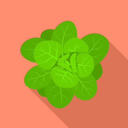 Green spinach icon. Flat illustration of green spinach vector icon for web design