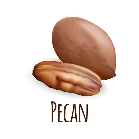 Pecan nut icon. Realistic illustration of pecan nut icon for web design isolated on white background Standard-Bild - 122465952
