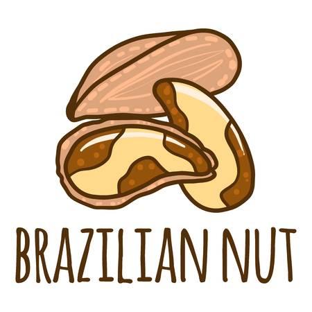 Brazilian nut icon. Hand drawn illustration of brazilian nut icon for web design