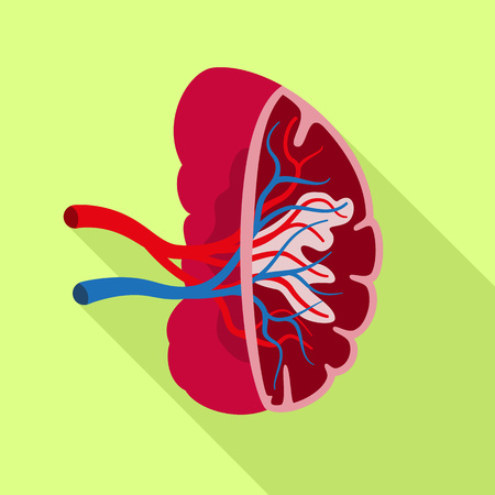 Healthy spleen icon. Flat illustration of healthy spleen icon for web design