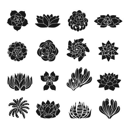 Succulent icons set. Simple set of succulent vector icons for web design on white background