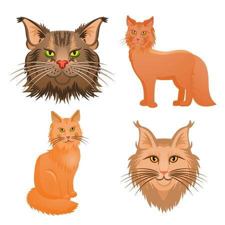 Maine coon icons set. Cartoon set of maine coon icons for web design Banco de Imagens