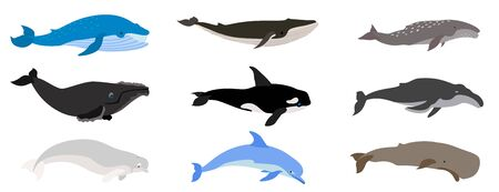 Whale icons set. Flat set of whale vector icons for web design
