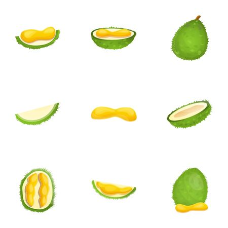 Fresh durian icon set. Cartoon set of 9 fresh durian vector icons for web design isolated on white background