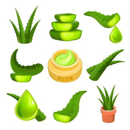 Aloe icons set. Cartoon set of aloe icons for web design 写真素材