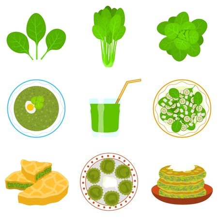 Spinach icons set. Flat set of spinach icons for web design
