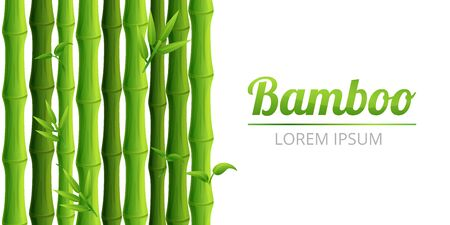 Bamboo forest concept banner. Cartoon illustration of bamboo forest vector concept banner for web design