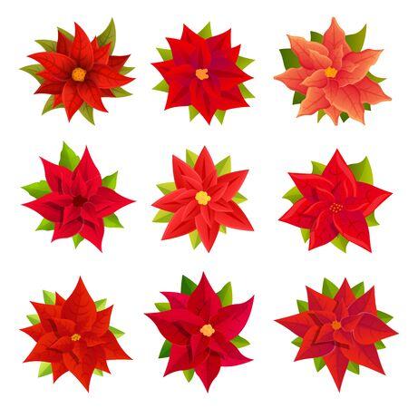 Poinsettia icons set. Cartoon set of poinsettia vector icons for web design