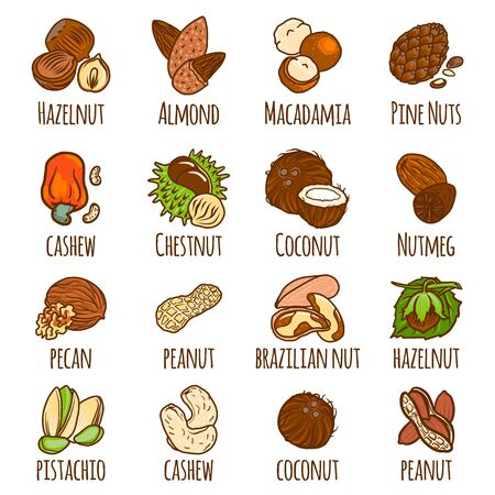 Nut icons set. Hand drawn set of nut vector icons for web design 일러스트