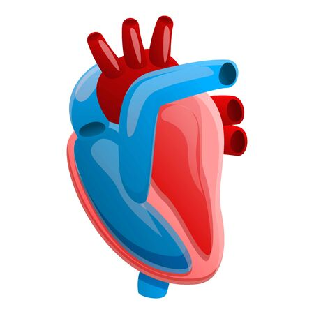 Anatomy human heart icon. Cartoon of anatomy human heart vector icon for web design isolated on white background