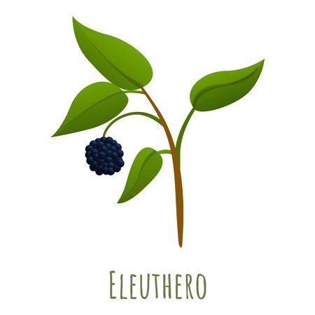 Eleuthero herb icon. Cartoon of eleuthero herb vector icon for web design isolated on white background