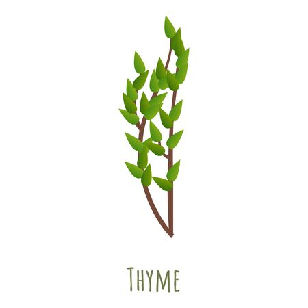Thyme herb icon. Cartoon of thyme herb vector icon for web design isolated on white background