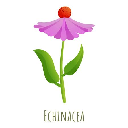 Echinacea flower icon. Cartoon of echinacea flower vector icon for web design isolated on white background