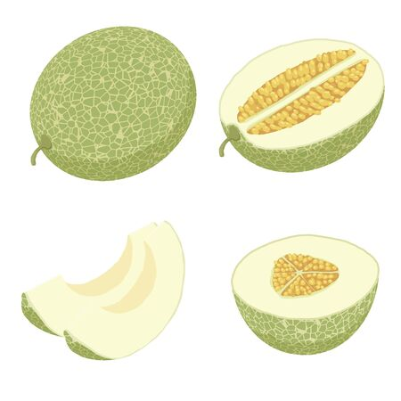 Melon icons set. Isometric set of melon vector icons for web design isolated on white background Vector Illustratie
