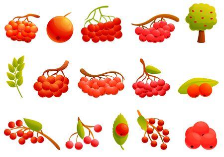 Rowan icons set. Cartoon set of rowan vector icons for web design