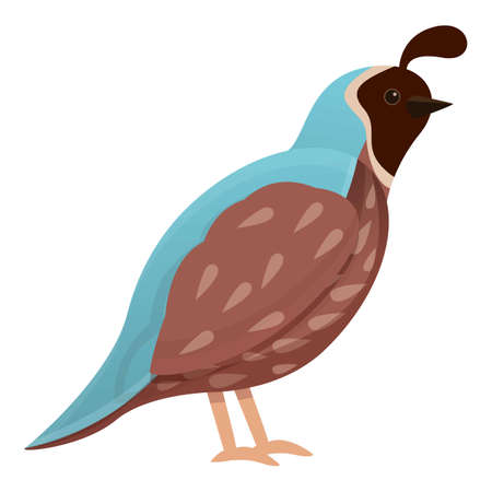 Wildlife quail icon. Cartoon of wildlife quail vector icon for web design isolated on white background Vettoriali