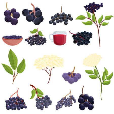 Elderberry icons set, cartoon style
