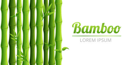 Bamboo forest concept banner, cartoon style