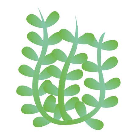 Algae icon, cartoon style