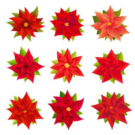 Poinsettia icons set, cartoon style Фото со стока