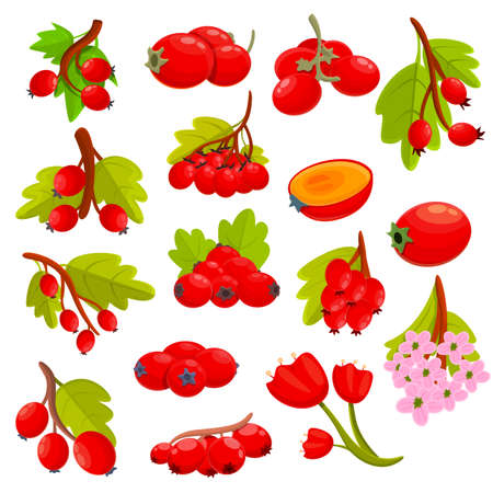 Hawthorn berry icons set, cartoon style