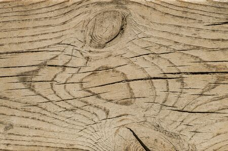shrinkage: Texture of old wooden cutting. Natural texture of an old pine trunk cut. The presence of knots and cracks of wood shrinkage. Stock Photo