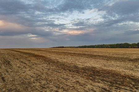 agro: Evening harvested field in late autumn. Stock Photo