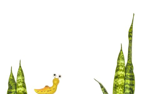 cochlea: Stems sansevieriya and figurine garden snail (slug) creeping on a white background.