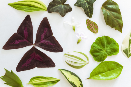 Background from the leaves of ornamental plants