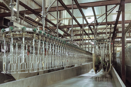 Poultry processing plant line. Standard equipment slaughterhouse and poultry processing. Suspended conveyor, bathroom stunning bird electrocution.