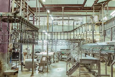 도살장 가금 공장을 도살하기위한 방. 가금류 가공 공장 라인. 닭고기 생산. 스톡 콘텐츠