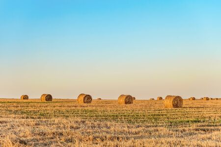 Row of straw bales on the field. Agricultural landscape with hay rolls. Stock Photo