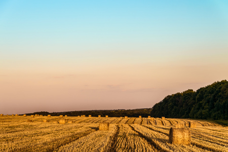 Evening summer field with more straw bales. Farmland with hay rolls. Stock Photo