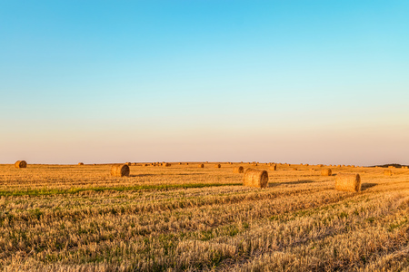 Evening summer field with more straw bales. Agricultural landscape with hay rolls.