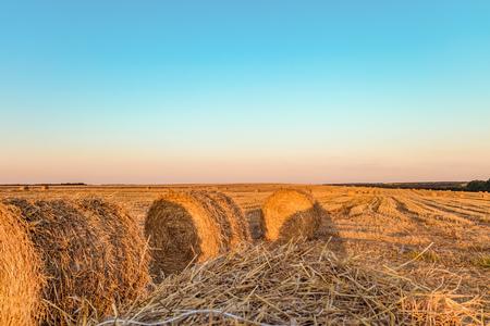 わら俵と夏の畑。近くに立っている干し草ロールします。 写真素材