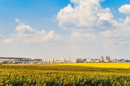 Gubkin city skyline, Belgorod region, Russia. Sunflower field on acity background.