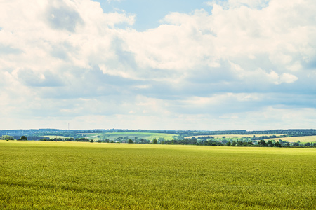 Daytime summer countryside landscape with a green young wheat field under a cloudy sky. Cereal field and green hills on the horizon. Belgorod region, Russia.