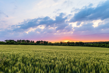 Countryside landscape with green ripening ears of wheat field under cloudy sky at sunset. Agricultural natural plantation. Belgorod region, Russia. Stock Photo