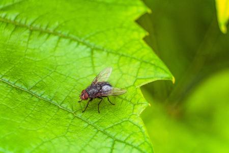 녹색 잎에 회색 비행 곤충입니다. 선택적 초점. 스톡 콘텐츠 - 97192486