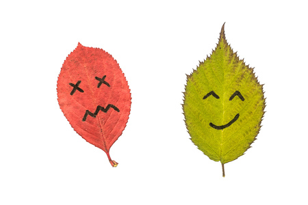 Two colorful autumn leaves with face emotions - dissatisfied and happy. Black marker on the red and green leaves. Isolated on white background. 免版税图像