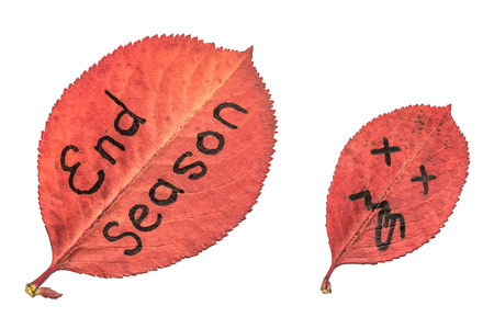Red autumn leaf with sad face showing tongue and leaf with the inscription END SEASON. Black marker on the leaves isolated on white background. Imagens