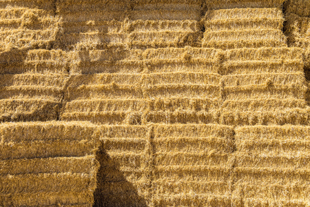 Harvested bales in piles of hay for cattle. Agricultural high haystack. Stok Fotoğraf