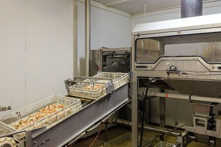 Egg shell grinding equipment and emptying boxes. Conveyor line of agro-industrial hatchery.