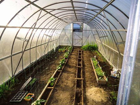Home garden greenhouse. Interior view. Carbonate coating on steel frame. Banque d'images