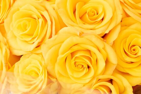 Big buds of vivid natural yellow roses in a bouquet